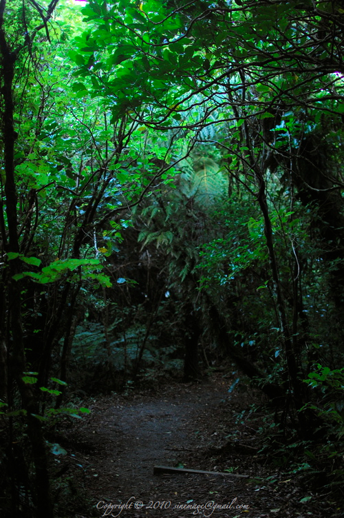 Sinemage Green Path Forest