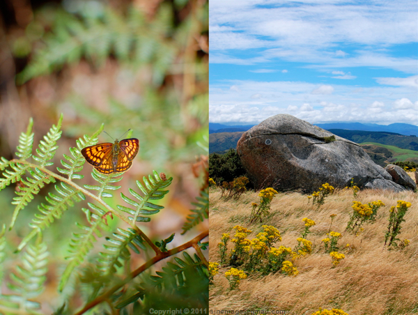 Sinemage Butterfly & rock diptych