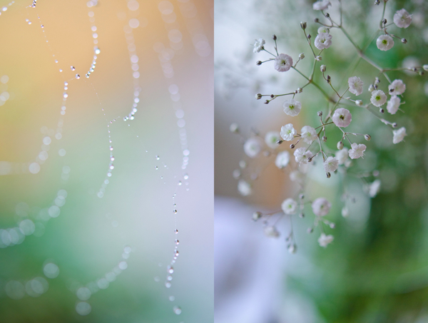 © 2011 Viviane Perenyi Droplet on Web & Flower